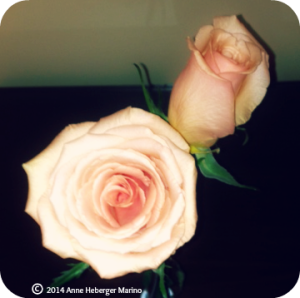 Two roses?!  Wow!